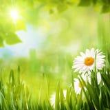 Milieux saisonniers d'été Image libre de droits