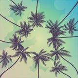 Milieux tropicaux d'été avec les paumes, le ciel et le coucher du soleil Carte d'invitation d'insecte d'affiche de plaquette d'ét illustration libre de droits