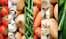 Milieux végétaux colorés Photographie stock