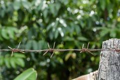 Milieux verts de nature de barbelé Photos libres de droits