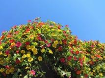 Milion Dzwonów kwiatów w lecie Obraz Royalty Free