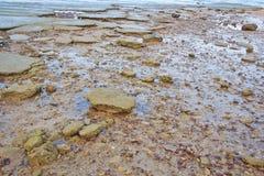 75 milione anni del fossile Shell Immagini Stock Libere da Diritti
