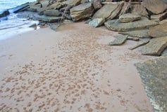 75 milione anni del fossile Shell Fotografia Stock Libera da Diritti
