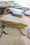 75 milione anni del fossile Shell Immagini Stock