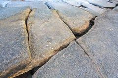 75 milione anni del fossile Shell Immagine Stock Libera da Diritti