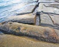 75 milione anni del fossile Shell Fotografie Stock