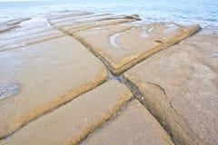 75 milione anni del fossile Shell Fotografie Stock Libere da Diritti