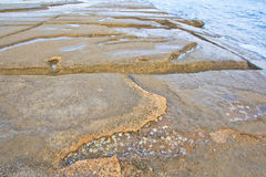 75 milione anni del fossile Shell Fotografia Stock