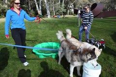 2012 milione eventi della passeggiata delle zampe a Canberra Fotografia Stock