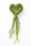 Milione piante di dave del cuore Fotografia Stock