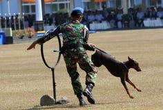 Militär hund royaltyfri foto