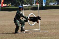 Militär hund royaltyfri fotografi