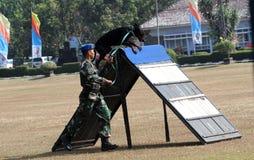 Militär hund royaltyfri bild