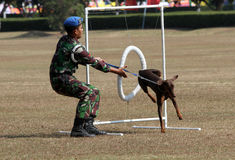 Militär hund arkivbilder