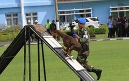 Militär hundutbildning Arkivfoto
