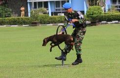 Militär hundutbildning Arkivfoton