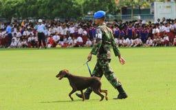 Militär hundutbildning Arkivbilder