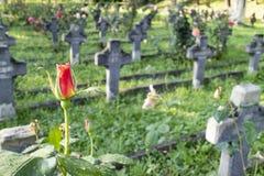 Militär kyrkogård, Cluj, Rumänien royaltyfri fotografi