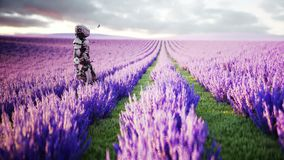 Militär robot, cyborg med vapnet i lavendelfält begrepp av framtiden Realistisk animering 4K vektor illustrationer