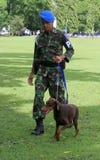 Militärhundetraining Stockbild