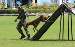 Militärhundetraining Stockfotos