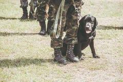 Militärhundetraining für die Hilfssoldaten Anti-Terrorist stockbild