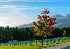 Militaire cementary Royalty-vrije Stock Fotografie