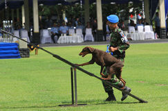 Militaire hond opleiding Royalty-vrije Stock Foto's
