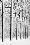 Militairen in de sneeuw Stock Foto's