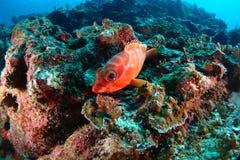 Militairvissen royalty-vrije stock afbeeldingen