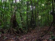 Militares ocultados en selva tropical, franceses Guyana Imagenes de archivo