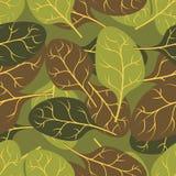 Militarna tekstura liścia szpinak Kamuflażu wojska bezszwowy pa Fotografia Stock