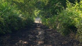 Militarni żołnierze siedzi na poruszającym wojennym zbiorniku na drodze w zielonym lesie popierają widok zbiory wideo