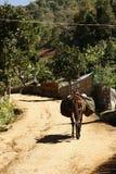 Militarny jucznego konia odprowadzenie przez wioski północny Tajlandia zdjęcie royalty free