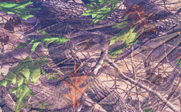 Militarny tekstura kamuflaż i raindrop use dla tła Obrazy Stock