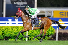 Military Attack ridden by Zac Purton at Singapore Airlines International Cup 2013 Royalty Free Stock Photo