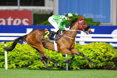 Military Attack winning the Singapore Airlines International Cup 2013 Royalty Free Stock Photography