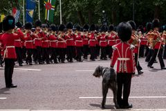 Military band marches down The Mall during Trooping the Colour military ceremony. Soldier with Irish Wolfhound dog salutes. stock images
