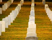 Military Cemetery. Rows of tombstones in military cemetery with afternoon light Royalty Free Stock Image