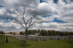 The tree on the old military cemetery Stock Photography