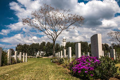 The tree on the old military cemetery Stock Image