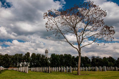 The tree with the military cemetery in the backgro Stock Photography