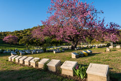 Military cemetery in Turkey. The Shrapnel Valley Cemetery on April 18, 2014 at the Gallipoli Peninsula, Turkey. The Gallipoli Peninsula is the site of extensive Stock Photo