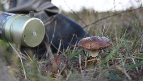 Military in a chemical protection suit measures the background radiation of mushrooms on the road, dosimetry equipment. Military in a protective suit checks the stock video footage
