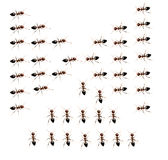 Military detachment of ants on a white background. Stock Photography
