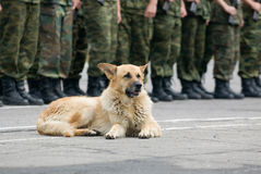 Military dog on the ground Royalty Free Stock Photo