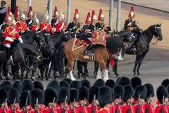 Military drum horse taking part in the Trooping the Colour military ceremony at Horse Guards, London UK stock photos