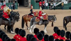 Military drum horses with riders taking part in the Trooping the Colour military ceremony at Horse Guards, London UK royalty free stock photo