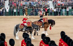 Military drum horses with riders taking part in the Trooping the Colour military ceremony at Horse Guards, London UK royalty free stock images