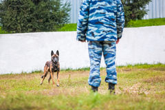 Military german shepherd ready-to-go Stock Photo